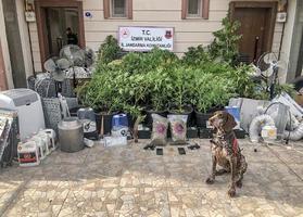 İzmir'in Menemen ilçesinde düzenlenen uyuşturucu operasyonunda 4 kişi gözaltına alındı. Operasyonda 1,5 kilo kubar esrar maddesi, 48 kök Hint keneviri, 2 tabanca, 19 fişek, hançer bıçak, uyuşturucu üretiminde kullanılan malzemeler ele geçirildi.  ( Jandarma Genel Komutanlığı - Anadolu Ajansı )