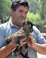 İzmir Büyükşehir Belediyesi Doğal Yaşam Parkı'ndaki çok sayıda hayvan yaz mevsimine yeni doğumlarla girdi. Belediyeden yapılan açıklamaya göre, her geçen gün genişleyen park ailesine katılan ceylan, zebra, ibis ve yaban keçisi yavruları, ziyaretçiler tarafından ilgiyle izleniyor.  ( İzmir Büyükşehir Belediyesi - Anadolu Ajansı )
