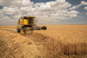 """Ülker'in, yüksek kalitede, sürdürülebilir üretim yapabilmek, buğday tedarikini uzun yıllar güvence altına alabilmek, yerli ve milli bisküvilik buğday üretimini hayata geçirmek için başlattığı proje ilk meyvesini verdi. Konya Bahri Dağdaş Uluslararası Tarımsal Araştırmalar Enstitüsü'yle ortaklaşa yürütülen çalışmalar kapsamında geliştirilen, bisküvilik un üretimine uygun, yüksek verimli, hastalıklara, kuraklığa dayanıklı """"Aliağa"""" adlı buğdayının ilk hasadı yapıldı. ( Ülker - Anadolu Ajansı )"""