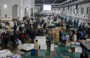 Türkiye'nin diğer bölgelerine kıyasla bereketli bir sezon geçiren Egeli balıkçılar, başta Karadeniz olmak üzere ülkenin birçok bölgesine balık gönderiyor. Egeli balıkçılar, sulara bıraktıkları ağlarını dolu çekmenin sevinciyle kıyıya dönüyor. Balık piyasasının belirlendiği İzmir Balık Hali de bereketli av sezonuyla hareketli günler geçiriyor. ( Emin Mengüarslan - Anadolu Ajansı )